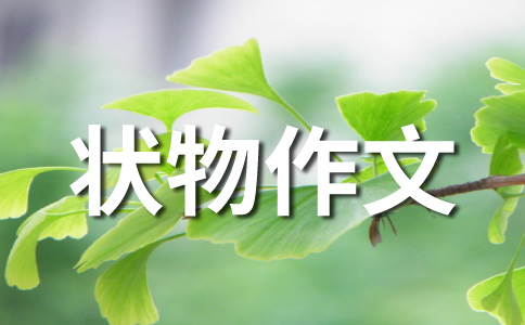 ★小动物作文汇编14篇