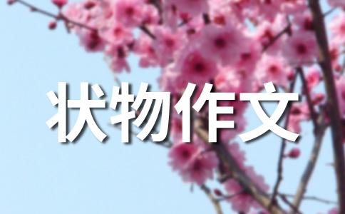 【热】游记500字作文集锦五篇